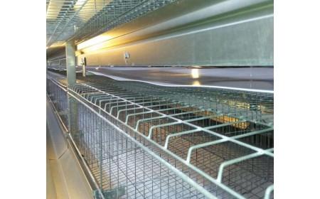 PP / PET-Geflügel-Düngemittel-Förderbänder für Hühnerfarm